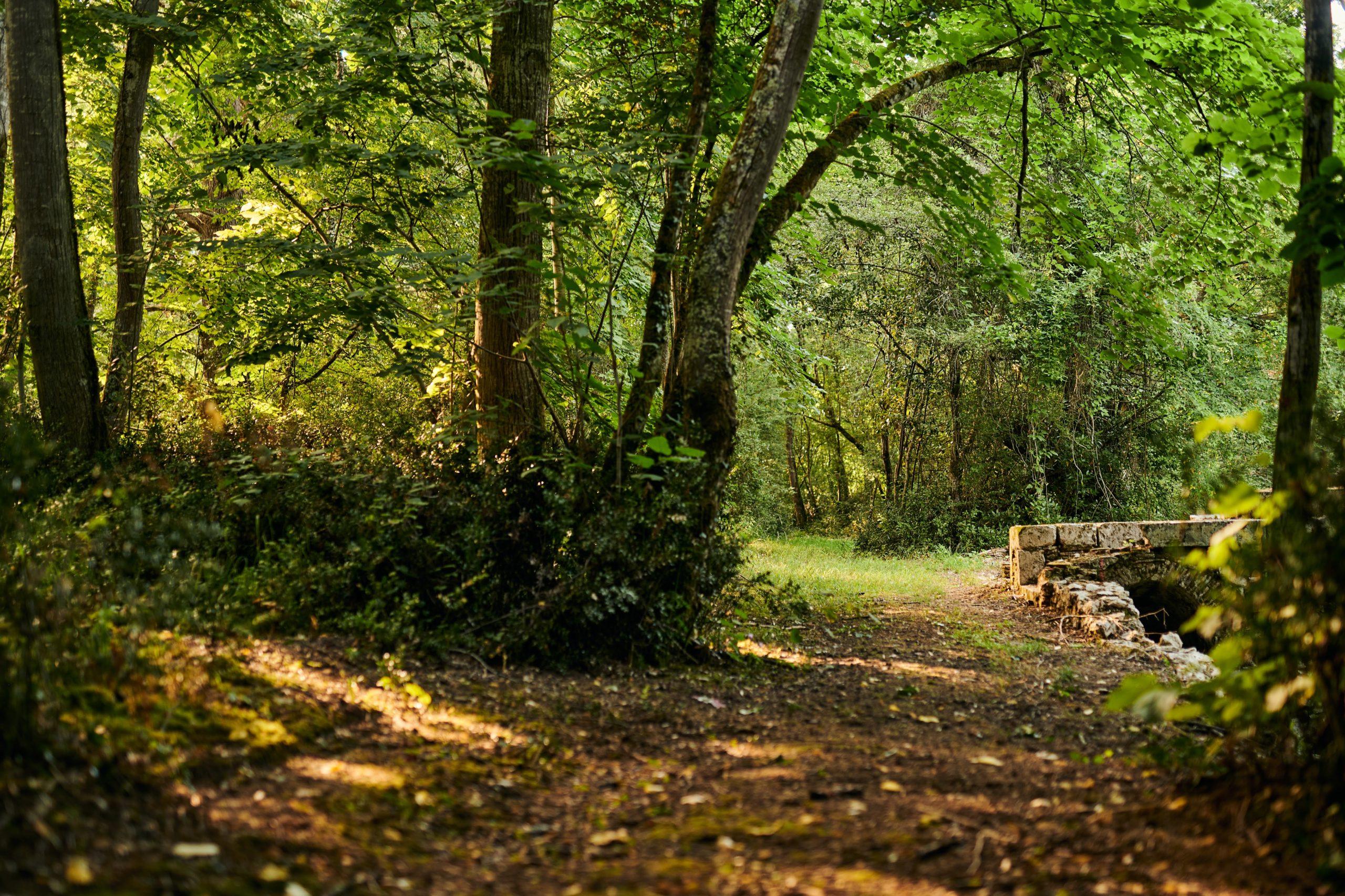 Zone forestière du parc du château de Buzet