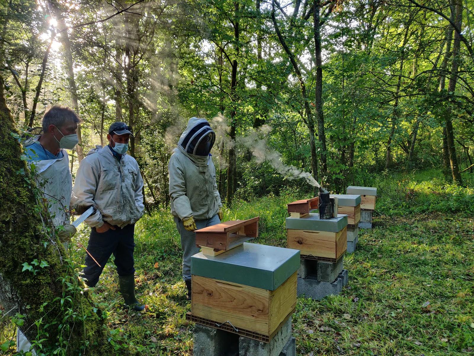 Apiculteurs et ruches du parc du château